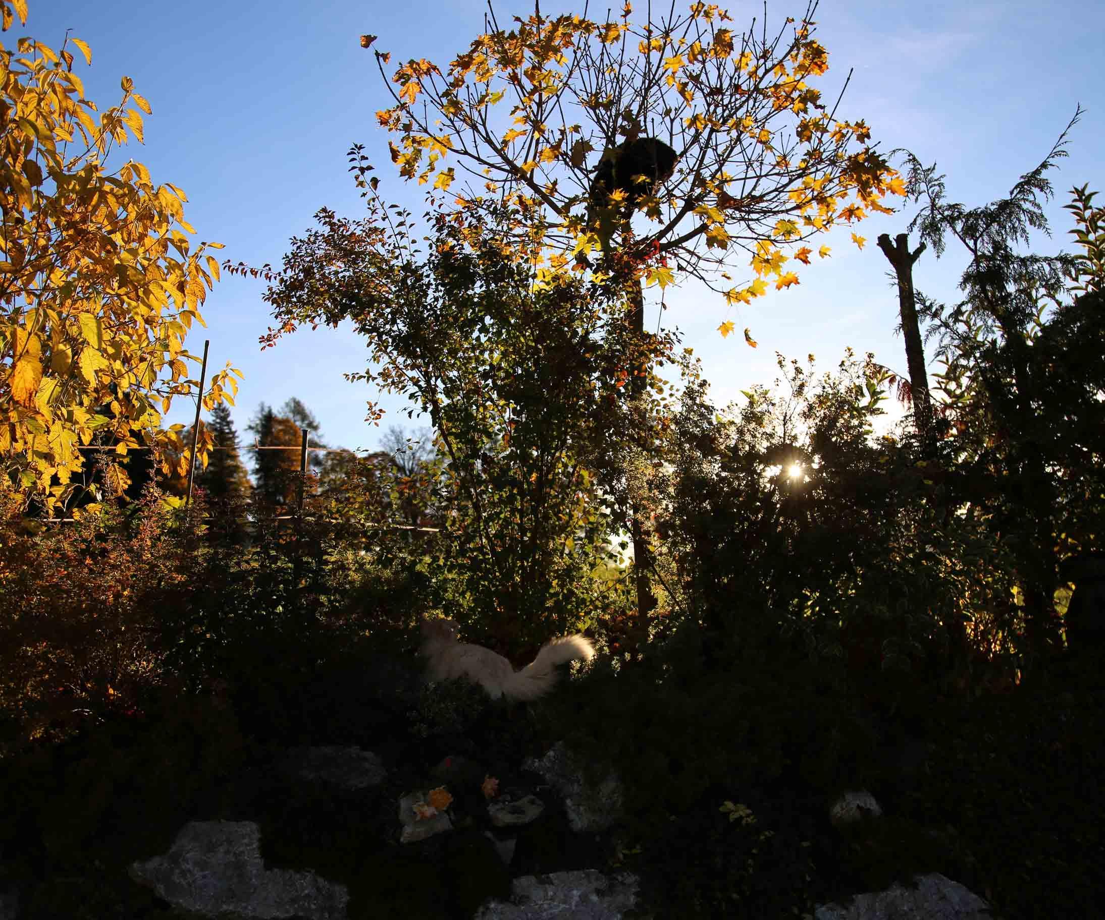 Alpengarten Katzen Herbst